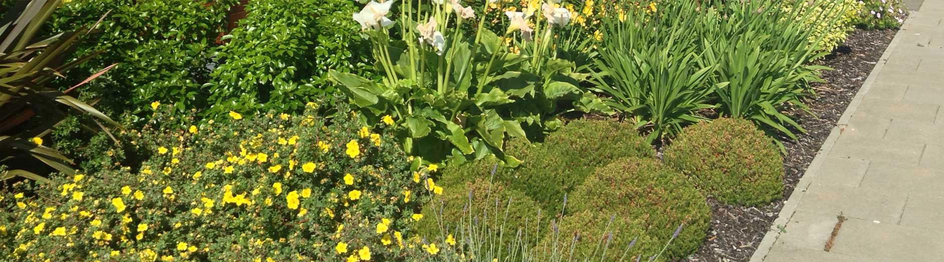yellow-garden-flowers