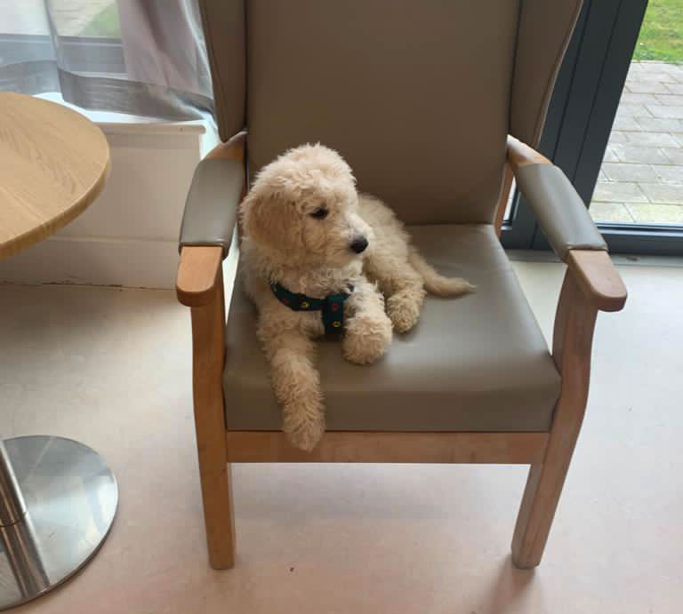 Kobi the nursing home dog